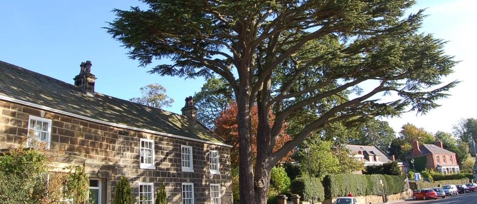 Homebuyers Mortgage Tree Report