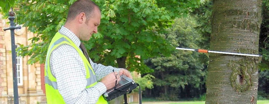 tree survey, tree report and tree inspection services