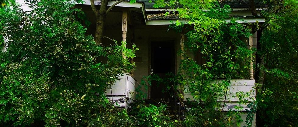 Tree Subsidence & Building Damage