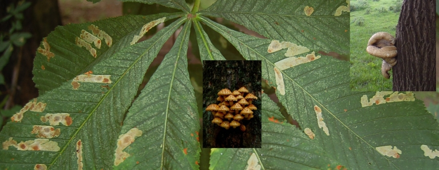 Tree diseases and pests